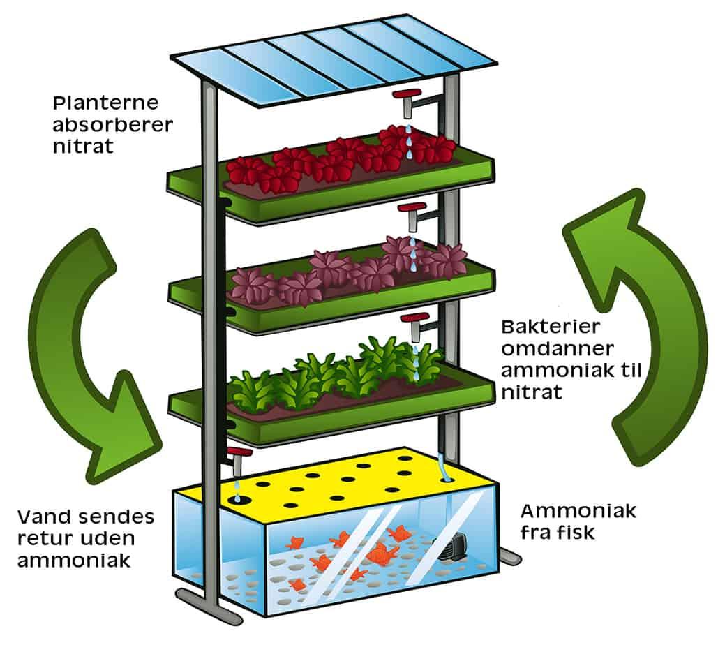 Akvaponi - aquaponics