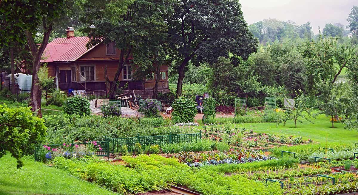 Køkkenhave