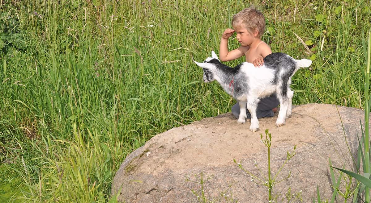 Dreng og ged